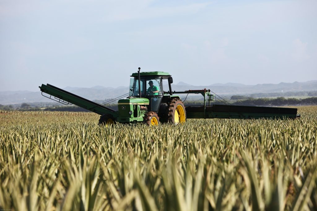 Proper farming practices can prevent the negative effects of mycotoxins on human health